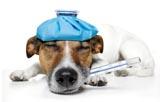 La homeopatía se usa cada vez más en los animales